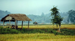 Reiseziel Hsipaw Myanmar