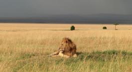 Destination Masai Mara Conservancy Kenya