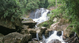 Destination Sinharaja Rainforest Sri Lanka