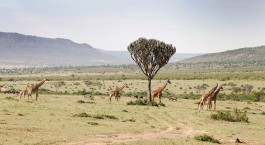Destination West Kilimanjaro Tanzania