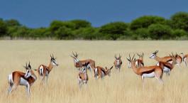 Destination Central Kalahari Botswana