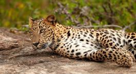 Reiseziel Wilpattu National Park Sri Lanka
