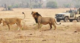 Reiseziel Kafue Sambia