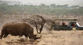 Reiseziel Laikipia Lewa Kenia