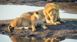 Reiseziel Kasane Botswana