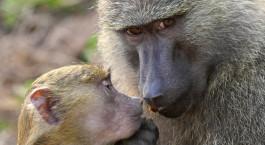 Reiseziel Gombe Stream Tansania