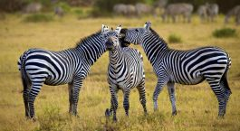 Reiseziel Arusha Tansania