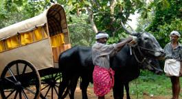 Reiseziel Kanam Südindien