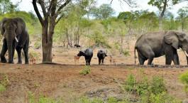 Destination Southern Kruger South Africa