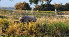 Reiseziel Mana Pools Simbabwe