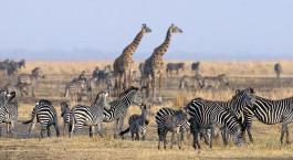 Reiseziel Katavi Tansania