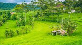 Reiseziel Bali, Sidemen Indonesien