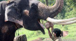 Reiseziel Bandipur Südindien