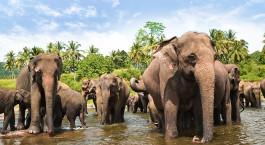 Reiseziel Yala National Park Sri Lanka