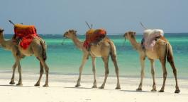 Reiseziel Nordküste Kenia