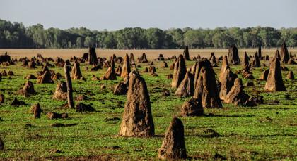 Bamurru in Australien