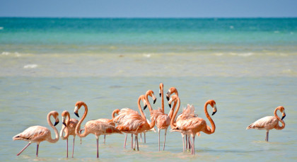 Isla Holbox in Mexiko