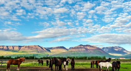 Varmahlíð in Island