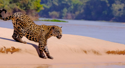 Pantanal South in Brasilien