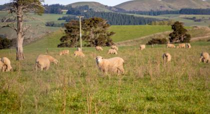Destination Martinborough in New Zealand