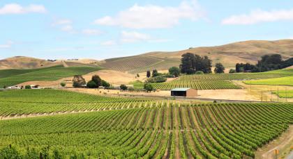 Weinland (Kalifornien) in USA