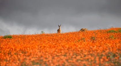 Destination Namaqualand in South Africa