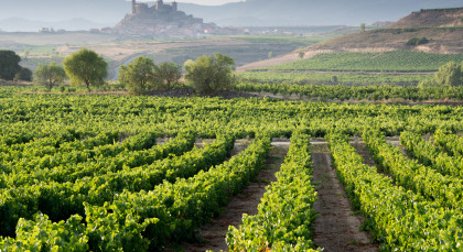 Destination La Rioja Region in Spain
