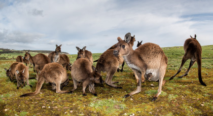 Destination Kangaroo Island in Australia