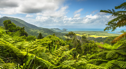 Destination The Daintree Rainforest in Australia