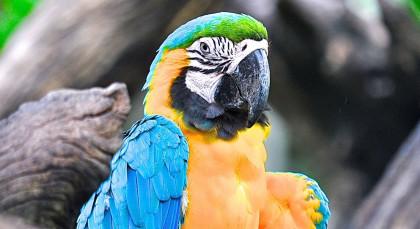 Amazonas in Brasilien