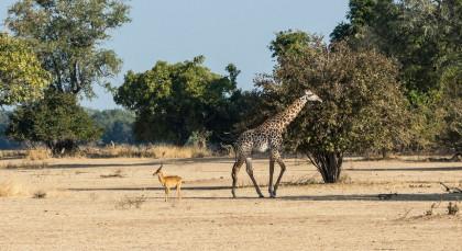 Destination South Luangwa in Zambia