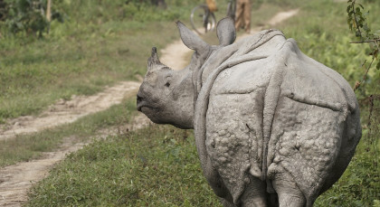 Destination Kaziranga in East India