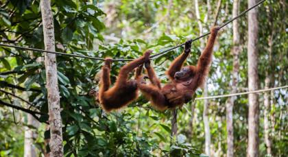 Sumatra, Bukit Lawang in Indonesien