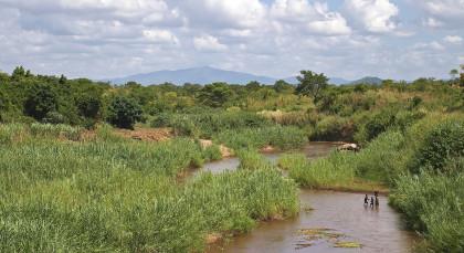 Liwonde Nationalpark in Malawi