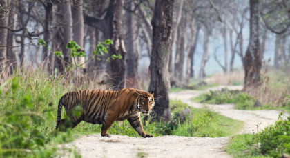 Destination Ranthambore in North India