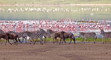 Destination Manyara and Ngorongoro in Tanzania