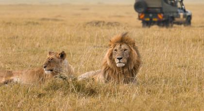 Masai Mara in Kenia