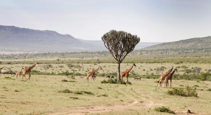 West Kilimanjaro Wildschutzgebiet in Tansania