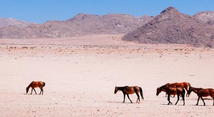 Destination Aus in Namibia