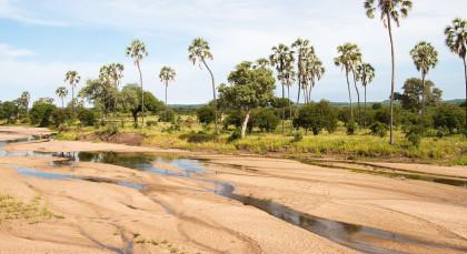 Ruaha in Tansania