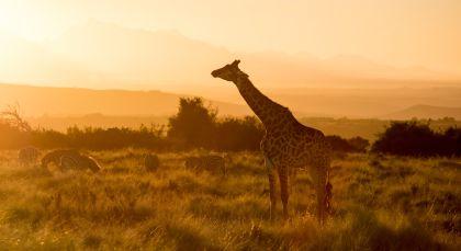 Gondwana-Wildreservat in Südafrika