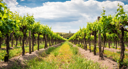 Destination Barossa Valley in Australia