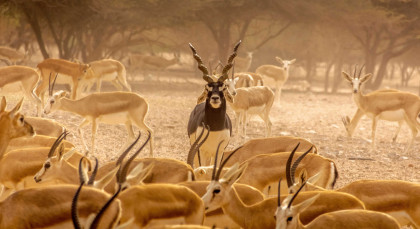 Destination Sir Bani Yas Island in United Arab Emirates