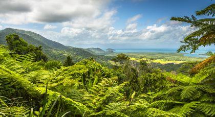 Daintree Rainforest in Australien