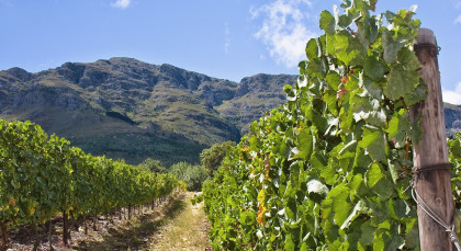 Winelands in Südafrika