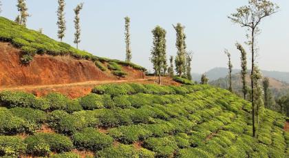Destination Wayanad in South India