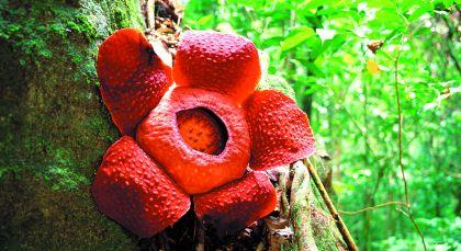 Taman Negara National Park in Malaysia
