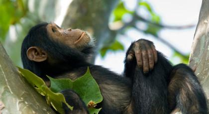 Nyungwe Forest in Ruanda
