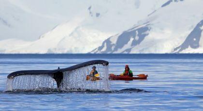 Destination Antarctica in Antarctica