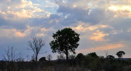 Hwange in Simbabwe